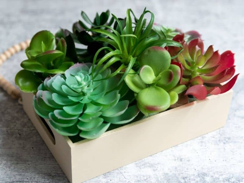 Easy DIY succulent wall planter