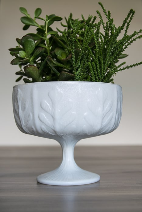 picture showing white tall pressed glass bowl with succulents