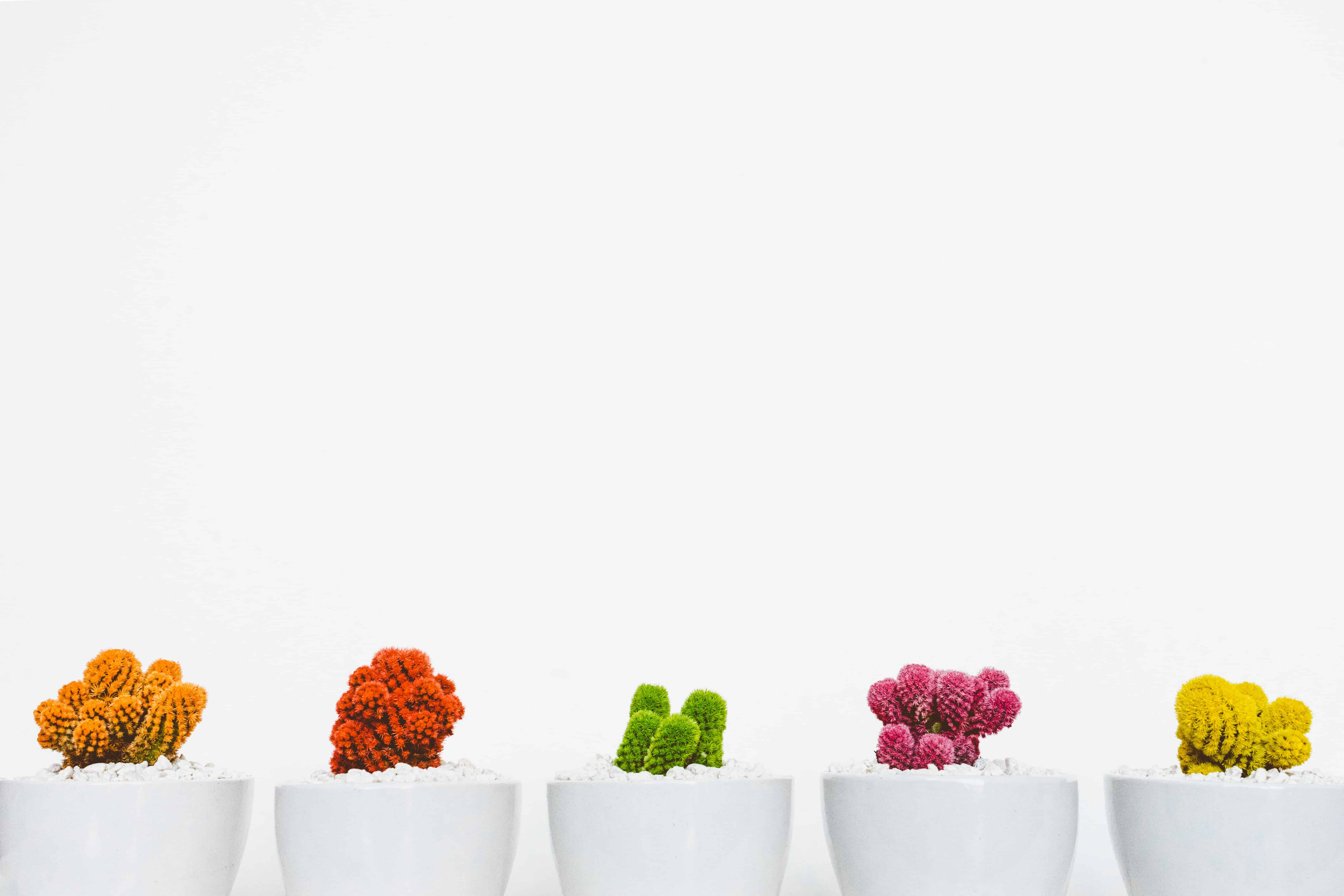 row of cactus plants in various colors