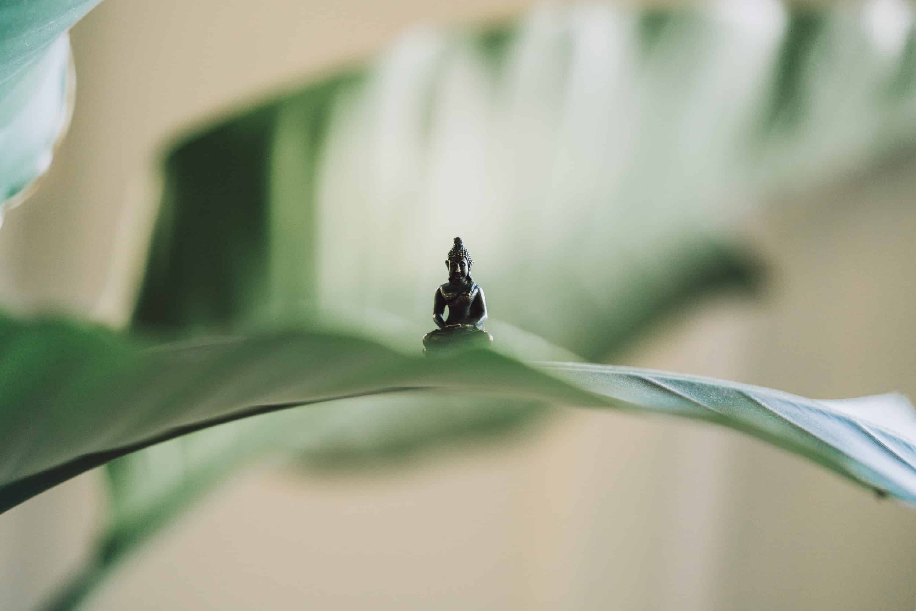 tiny buddha figure surrounded by plants