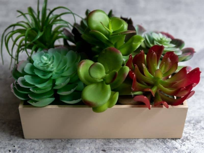 wood tray with succulent plants