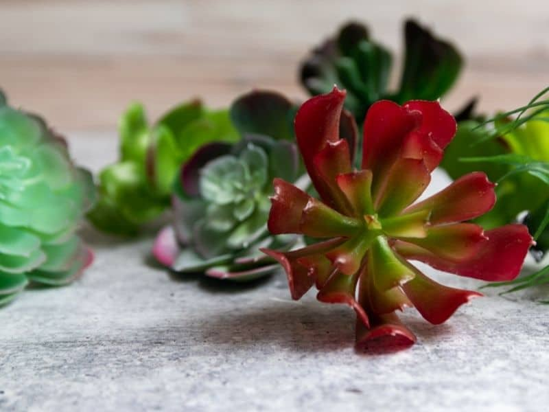 faux succulent plants in various colors and shapes