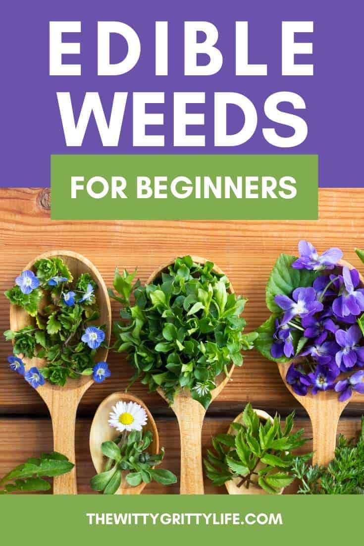 Edible weeds pinterest image