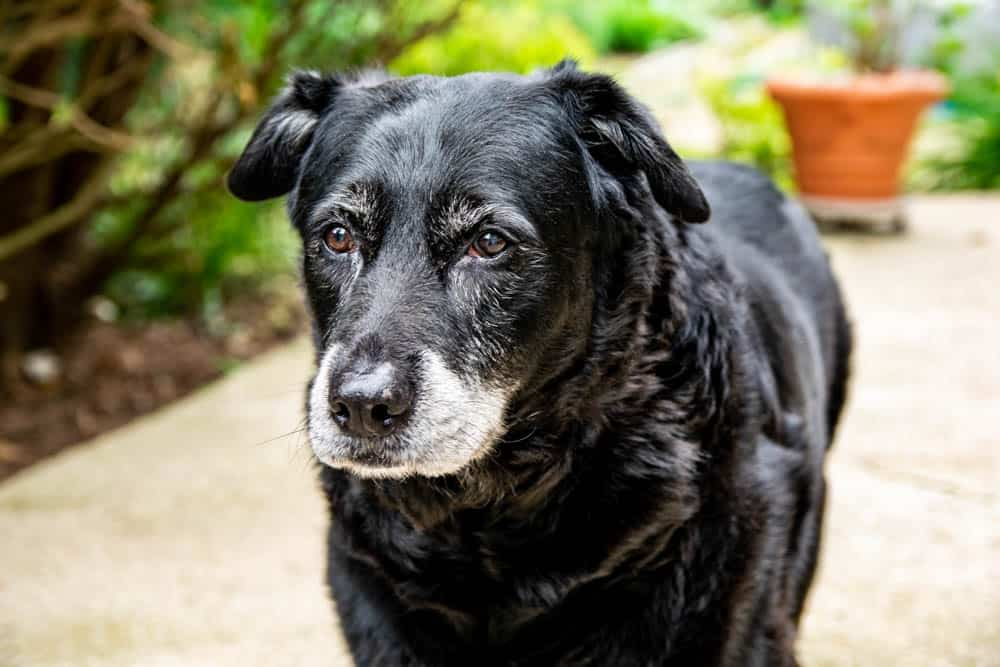 picture of Rascal, the best dog ever!