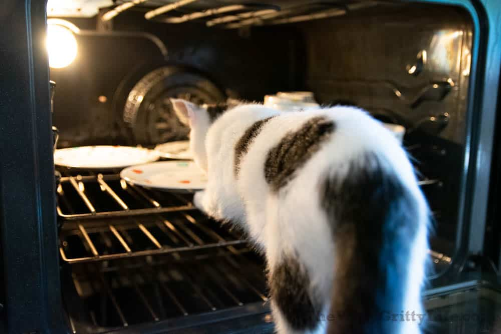 cat trying to get into oven with dishes