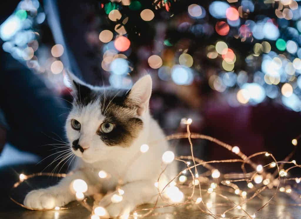 cat with christmas lights for safe christmas