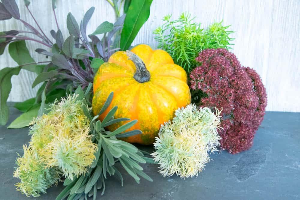 Various fall garden plant clippings, a small pumpkin for diy fall pumpkin decor