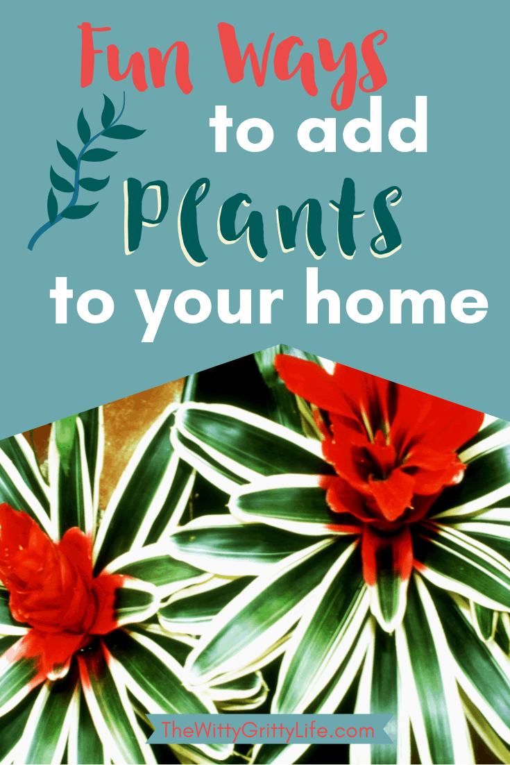 add plants to your home, image featuring brightly colored house plants