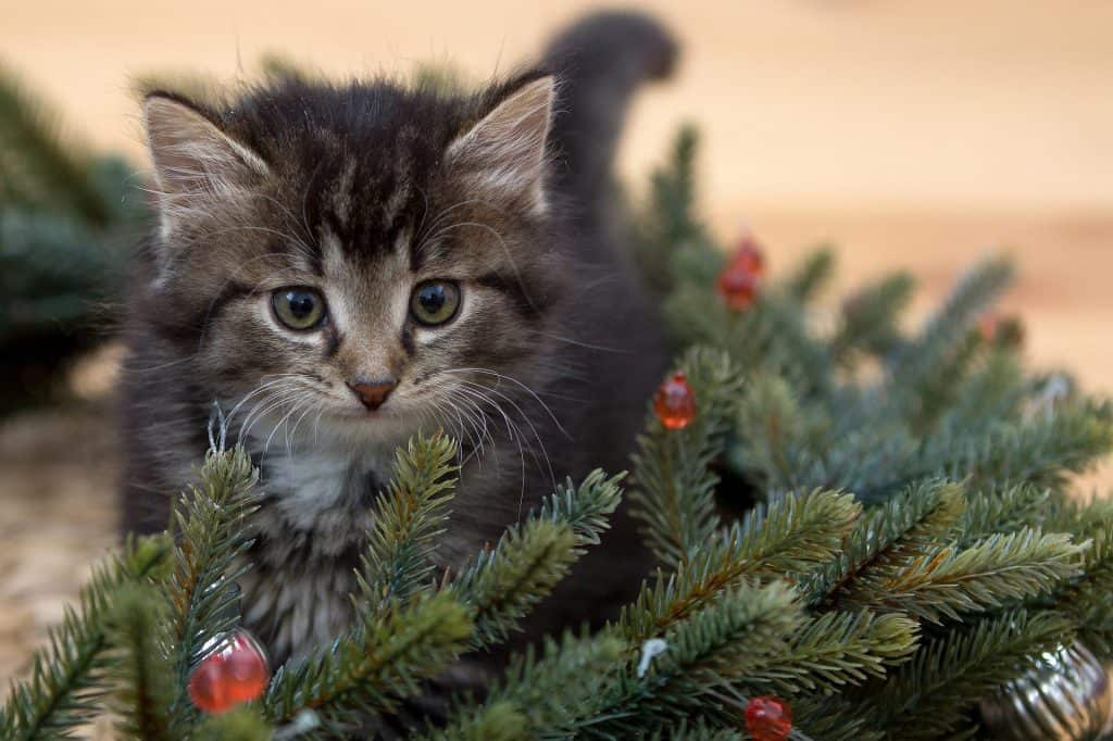 how to have a merry and safe christmas kitten