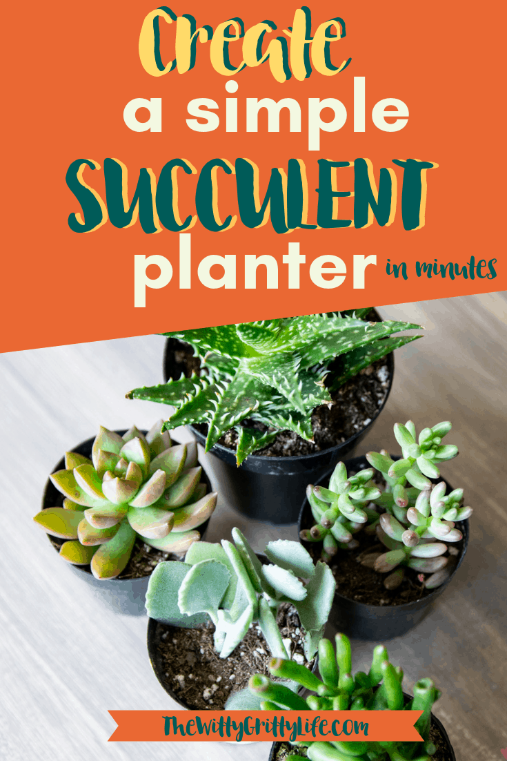 Succulents are an easy way to get creative with indoor gardening. Turn that fun ceramic planter you found at the thrift store into unique living DIY decor item you can be proud of! Planting succulents is a quick and easy way to add even more personality to your spaces, inside your home or outdoor!