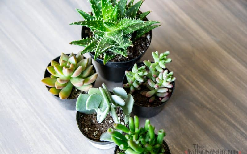 Various plants for a simple succulent planter