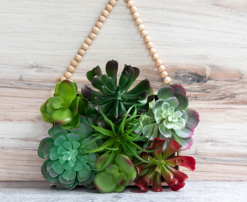 succulent planter on the wall